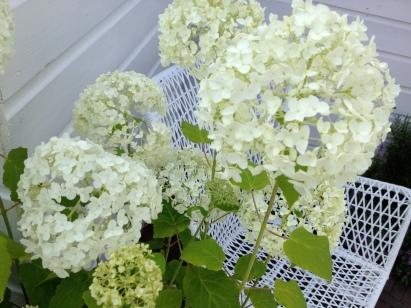 I love white hortensias