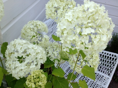 I love white hortensias