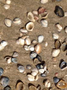 Look for Shells on the Beach