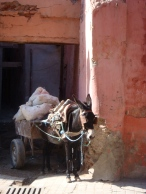 out-of-control Donkey carts everywhere ;)
